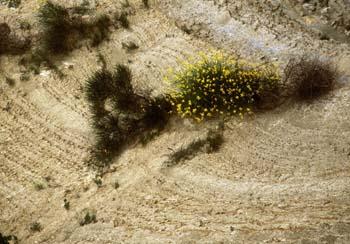 Strunjanski klif - sončni prepadi