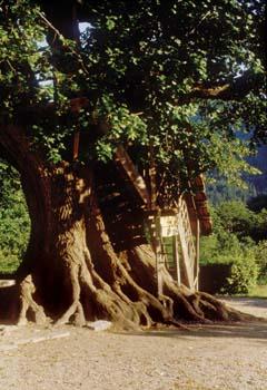 Lipa pri Novi Štifti - romanje h koreninam