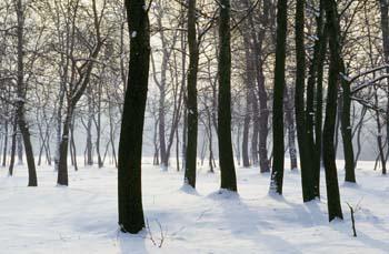 Šturmovci - oaza med Dravo in Dravinjo