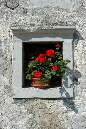 Kraško okno v cvetju