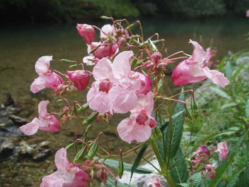 Rože v kanjonu reke Kokre