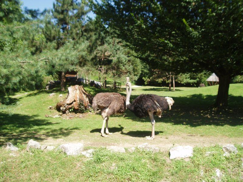 zoo zivalski vrt noj