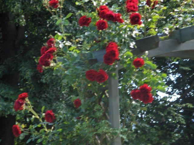 blogi 420 420 Botanični vrt Univerze v Mariboru