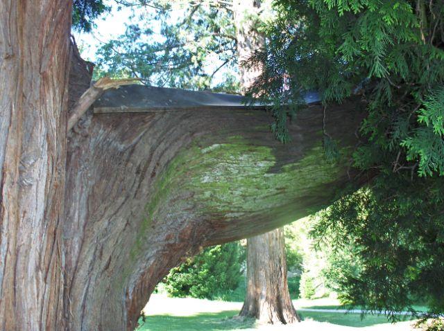 blogi 420 429 Botanični vrt Univerze v Mariboru