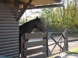blogi 420 IMG 00101 Konji in hipodrom