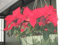 blogi 420 IMG 0236 Prireditve v decembru