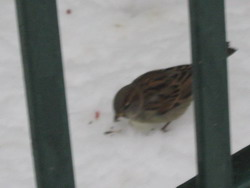 blogi 420 IMG 0240 Pomagajmo pticam