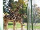 blogi 420 img 0014 20081017 1692870875 Živalski vrt