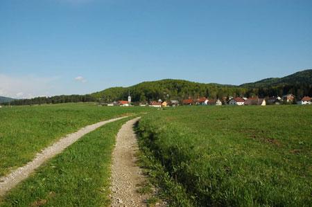 Pot Iz Babnega Polja do Goričic je speljana pretežno po kolovoznih in gozdnih poteh.