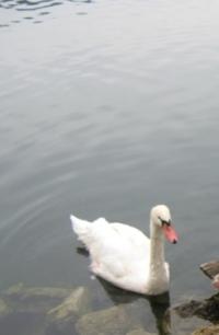blogi 420 ljubljana 074 20090110 1569462745 Labodje jezero