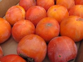 blogi 420 strunjan 029 20091108 1760110221 Božanski sadež