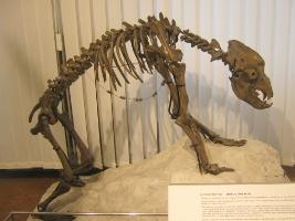 blogi 420 ljubljana 060 20090202 1311557380 Neandertalčeva piščal