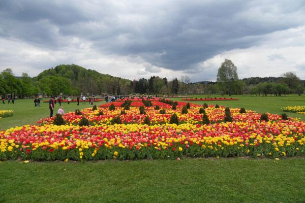 blogi 80 Volcji potok tulipani Razstava dinozavrov v Arboretumu Volčji Potok