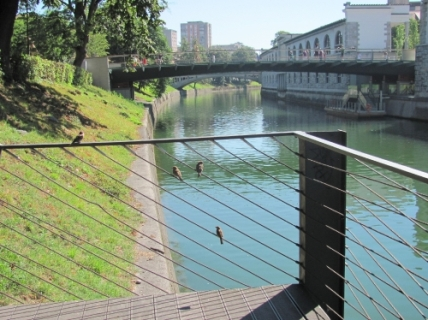 blogi 420 ljubljana 8 021 20100802 1337083814 Mesarski most na Ljubljanici