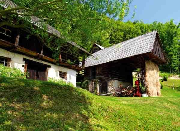 novice kmetija slapsak 2 Odkrivanje skritega potenciala gob in slovenskega podzemlja